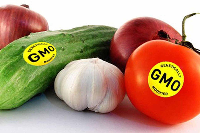 что такое гмо в продуктах питания фото